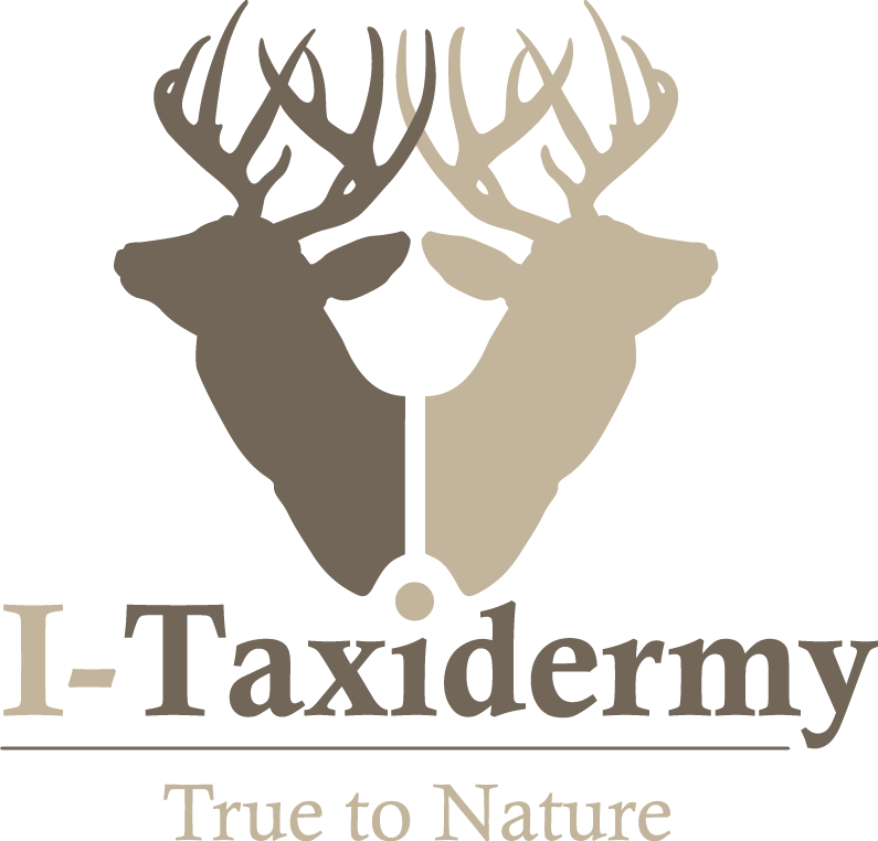 I-Taxidermy